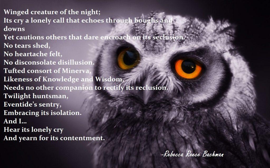owl-for-blog
